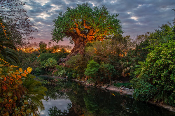 Lion King Disney S Animal Kingdom Discount Tickets